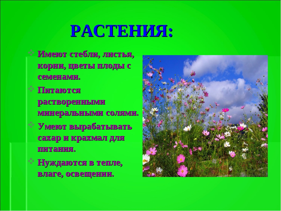 РАСТЕНИЯ: Имеют стебли, листья, корни, цветы плоды с семенами. Питаются раст...