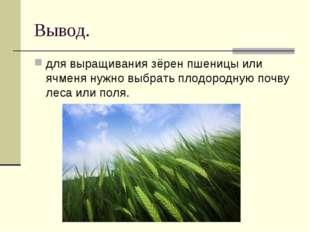 Вывод. для выращивания зёрен пшеницы или ячменя нужно выбрать плодородную поч