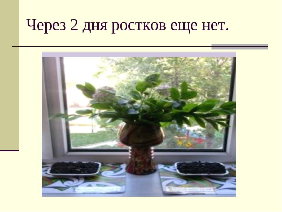 Через 2 дня ростков еще нет.