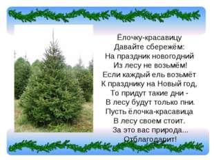 Ёлочку-красавицу Давайте сбережём: На праздник новогодний Из лесу не возьм