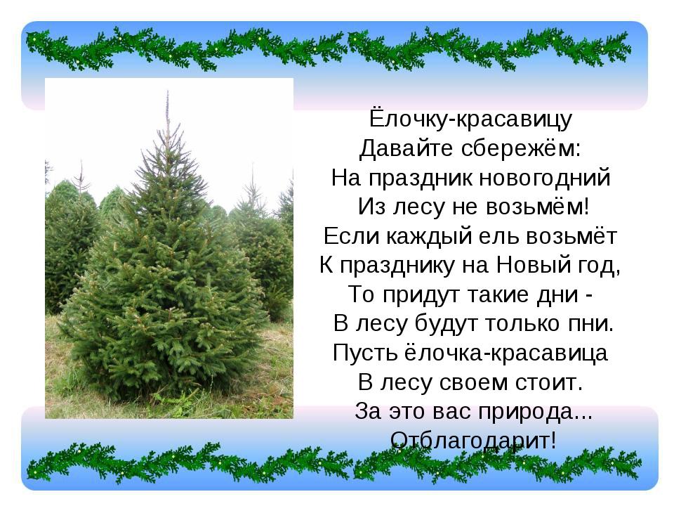 Ёлочку-красавицу Давайте сбережём: На праздник новогодний Из лесу не возьм...