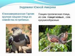 Эндемики Южной Америки Южноамериканская Гарпия крупная хищная птица из семейс