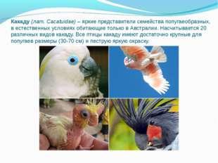 Какаду(лат. Cacatuidae)– яркие представители семейства попугаеобразных, в е