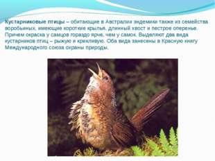Кустарниковые птицы–обитающие в Австралии эндемики также из семейства вороб