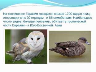 На континенте Евразия гнездится свыше 1700 видов птиц, относящихся к 20 отря
