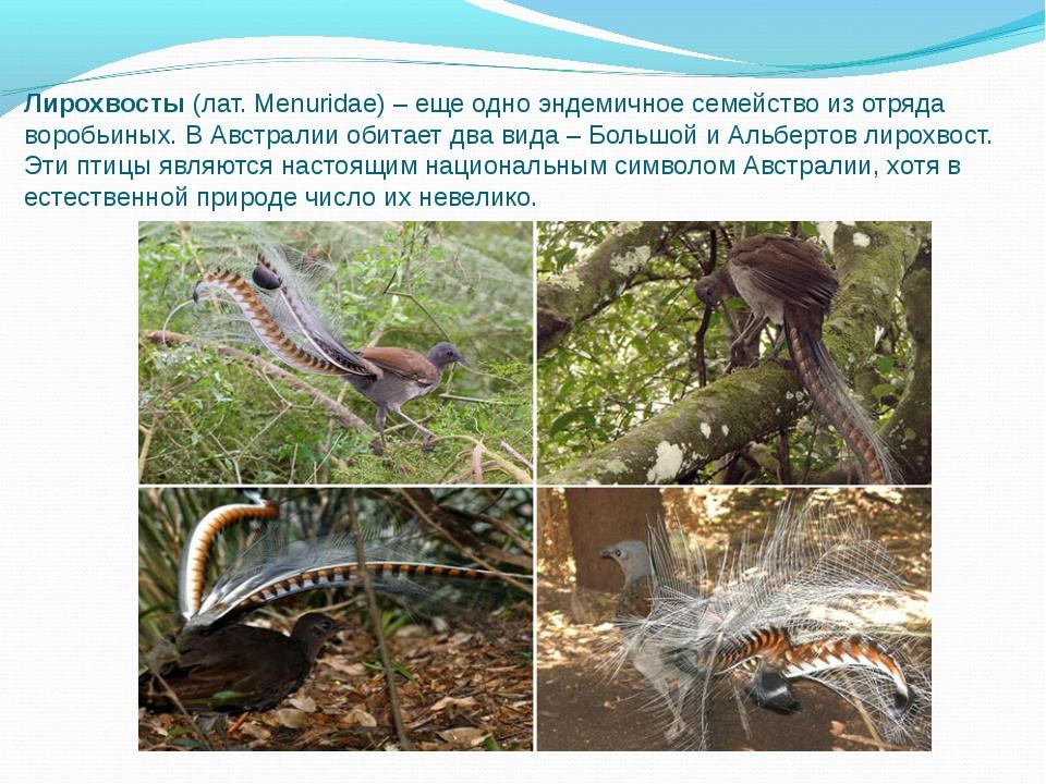 Лирохвосты(лат. Menuridae) – еще одно эндемичное семейство из отряда воробьи...