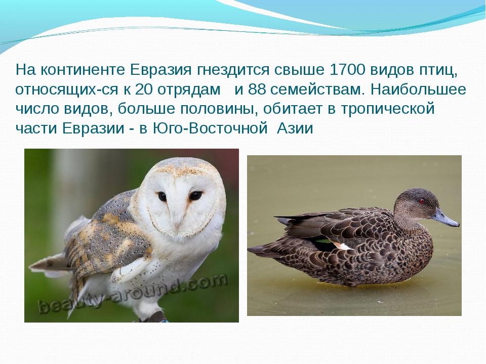 На континенте Евразия гнездится свыше 1700 видов птиц, относящихся к 20 отря...