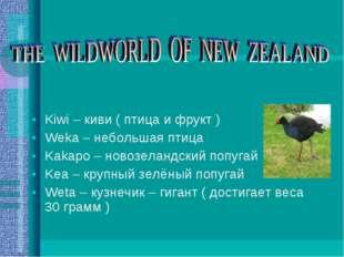 Kiwi – киви ( птица и фрукт ) Weka – небольшая птица Kakapo – новозеландский