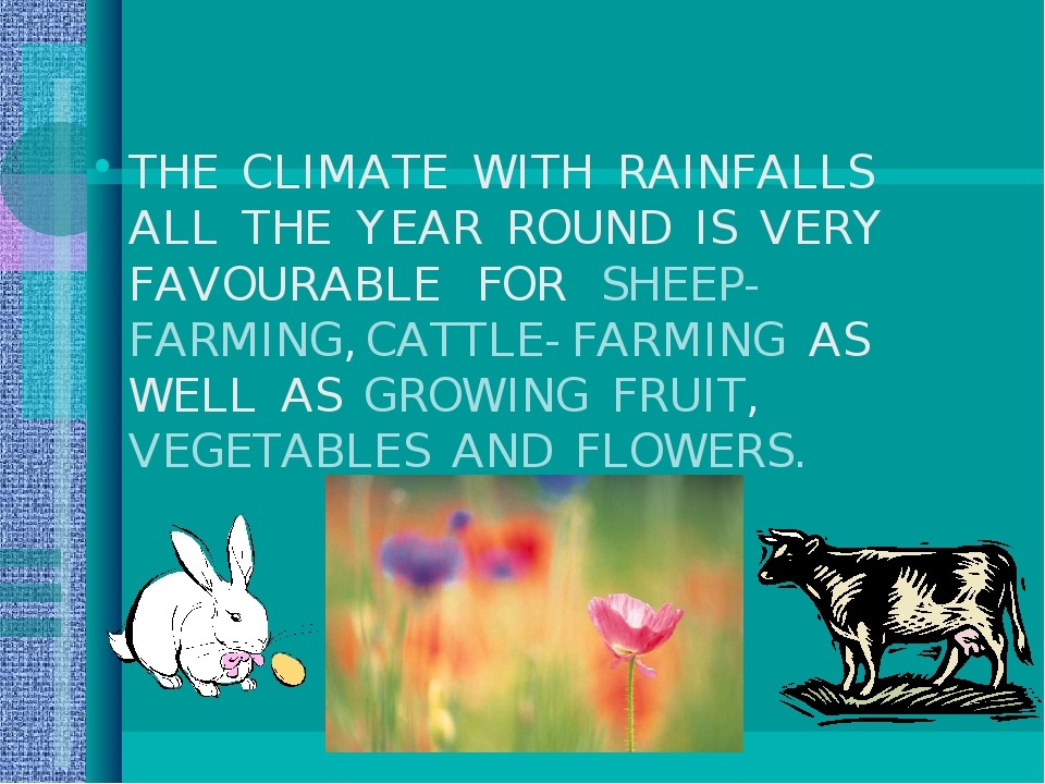 THE CLIMATE WITH RAINFALLS ALL THE YEAR ROUND IS VERY FAVOURABLE FOR SHEEP- F...