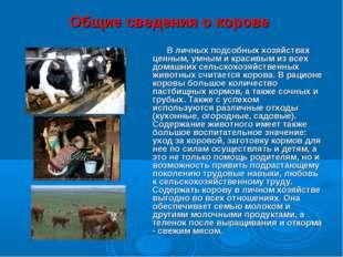 Общие сведения о корове В личных подсобных хозяйствах ценным, умным и красивы