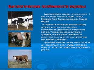 Биологические особенности коровы Одомашнивание коровы началось около 8 тыс. л