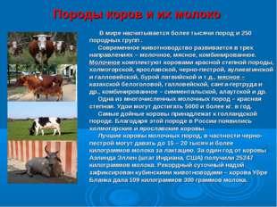 Породы коров и их молоко В мире насчитывается более тысячи пород и 250 породн