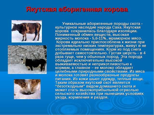 Якутская аборигенная корова Уникальные аборигенные породы скота - культурное...