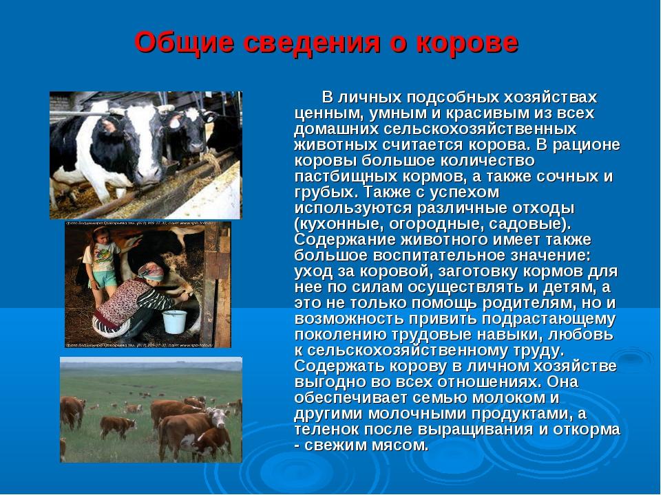 Общие сведения о корове В личных подсобных хозяйствах ценным, умным и красивы...