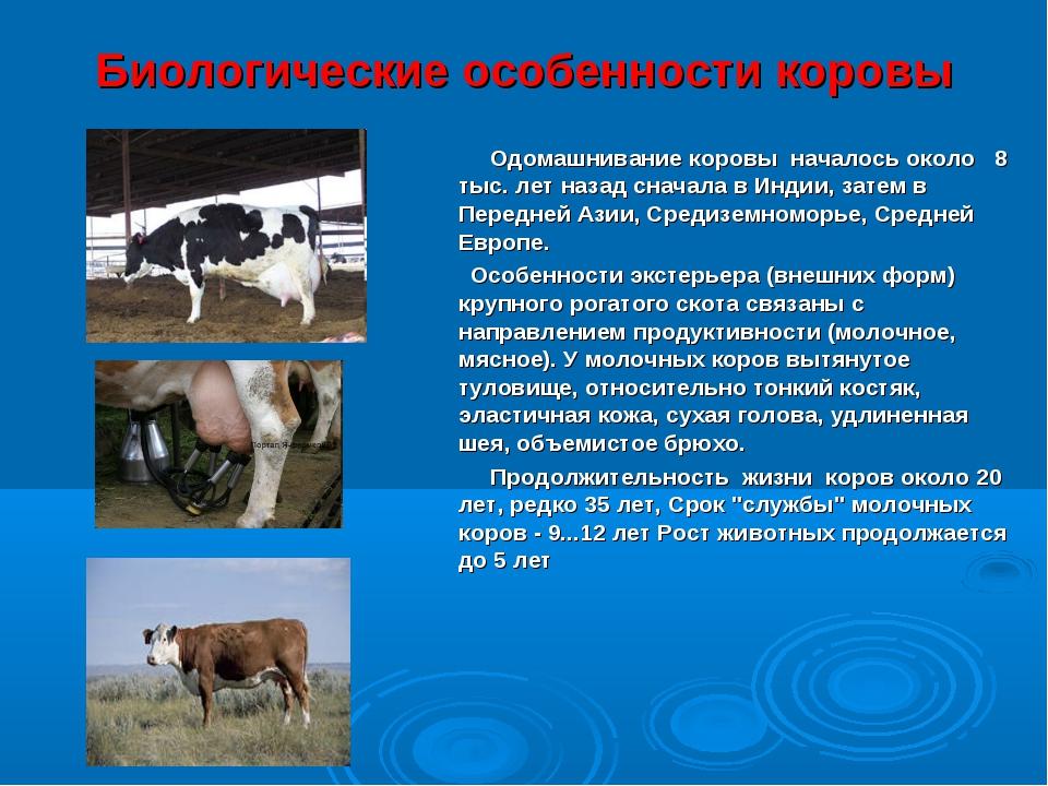 Биологические особенности коровы Одомашнивание коровы началось около 8 тыс. л...