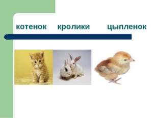 котенок кролики цыпленок