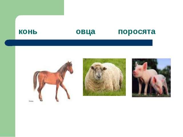 конь овца поросята