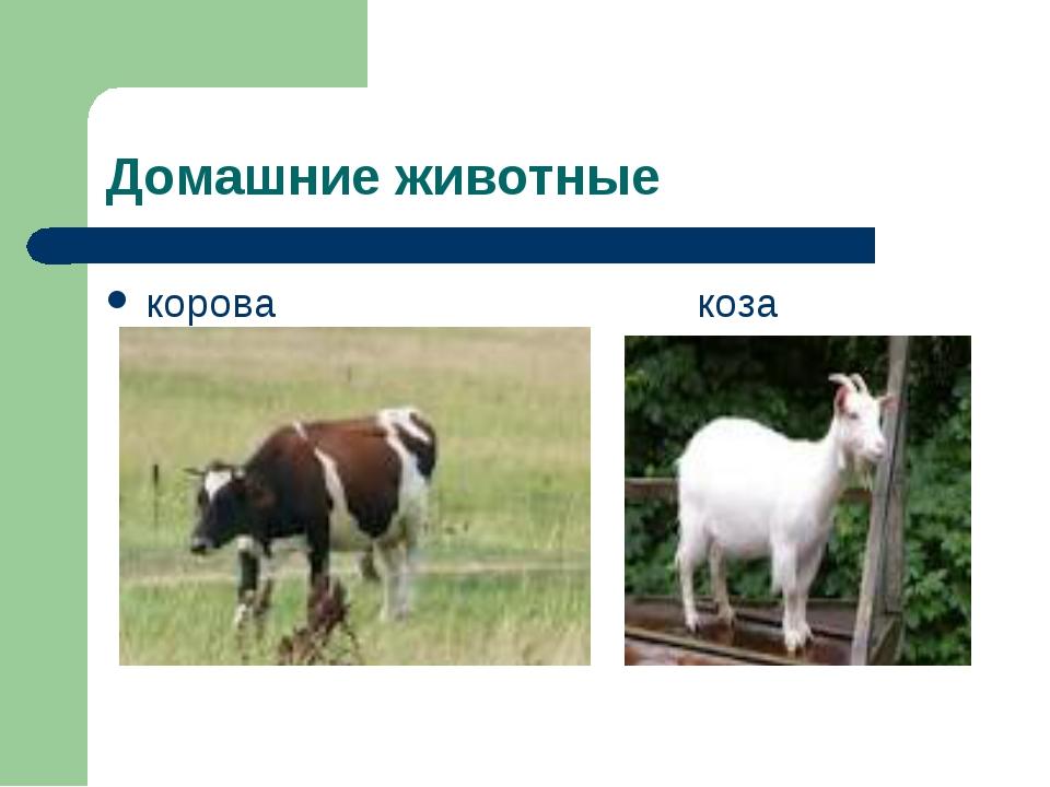 Домашние животные корова коза
