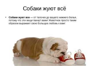Собаки жуют всё Собаки жуют все — от тапочек до вашего нижнего белья, потому