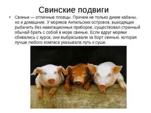 Свинские подвиги Свиньи — отличные пловцы. Причем не только дикие кабаны, но