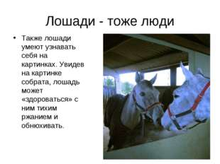 Лошади - тоже люди Также лошади умеют узнавать себя на картинках. Увидев на к