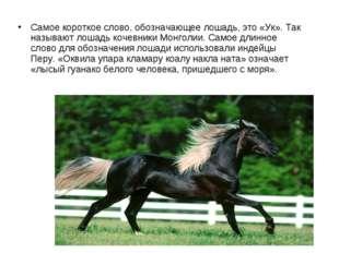 Самое короткое слово, обозначающее лошадь, это «Ук». Так называют лошадь коче