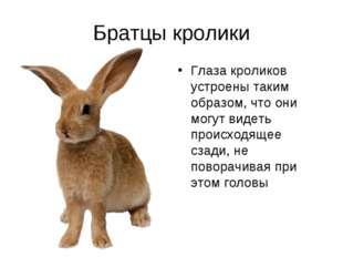 Братцы кролики Глаза кроликов устроены таким образом, что они могут видеть пр
