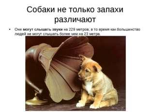 Собаки не только запахи различают Они могут слышать звуки на 229 метров, в то