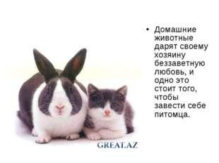 Домашние животные дарят своему хозяину беззаветную любовь, и одно это стоит т