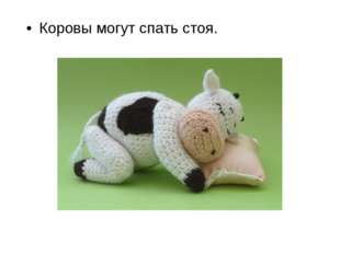 Коровы могут спать стоя.