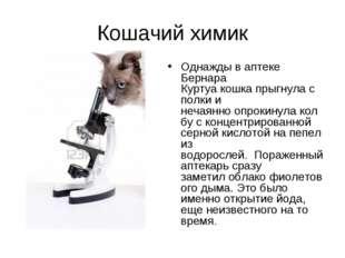 Кошачий химик Однажды в аптеке Бернара Куртуакошкапрыгнулас полкии нечаян