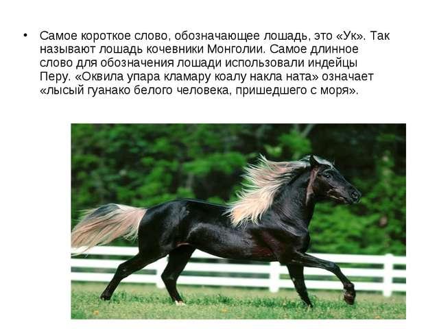 Самое короткое слово, обозначающее лошадь, это «Ук». Так называют лошадь коче...