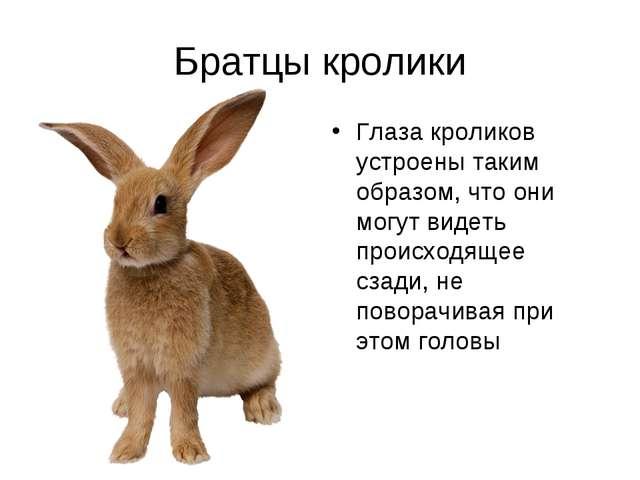 Братцы кролики Глаза кроликов устроены таким образом, что они могут видеть пр...