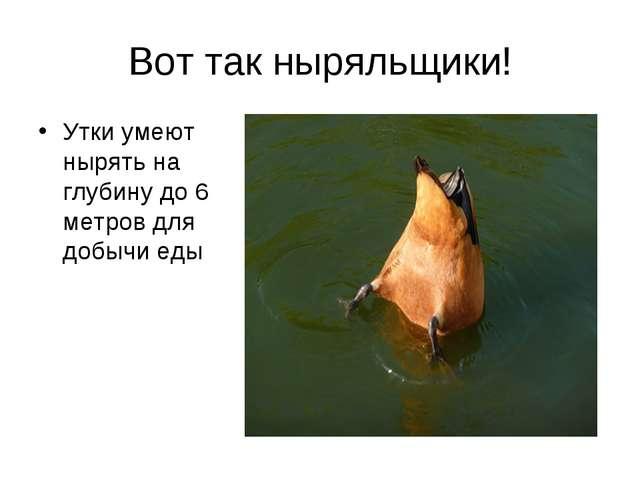 Вот так ныряльщики! Утки умеют нырять на глубину до 6 метров для добычи еды
