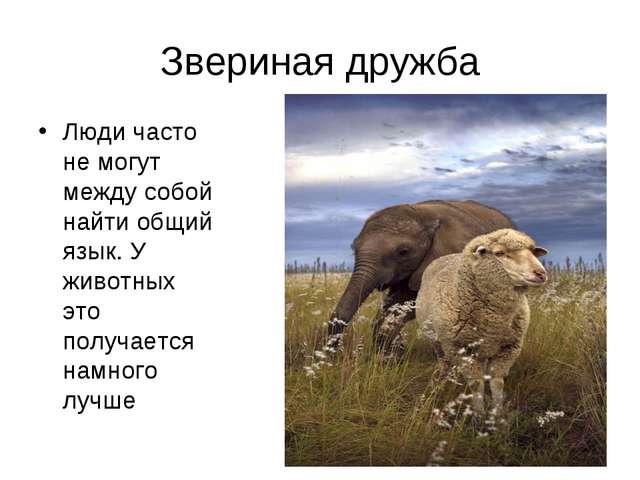 Звериная дружба Люди часто не могут между собой найти общий язык. У животных...