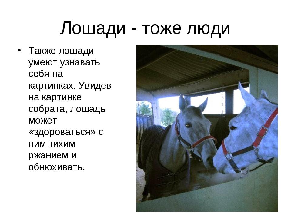 Лошади - тоже люди Также лошади умеют узнавать себя на картинках. Увидев на к...
