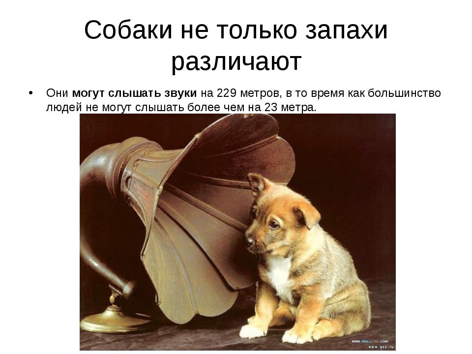 Собаки не только запахи различают Они могут слышать звуки на 229 метров, в то...