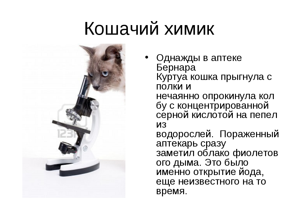 Кошачий химик Однажды в аптеке Бернара Куртуакошкапрыгнулас полкии нечаян...