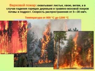 Верховой пожар: охватывает листья, хвою, ветви, а в случае падения горящих де