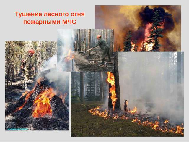 Тушение лесного огня пожарными МЧС