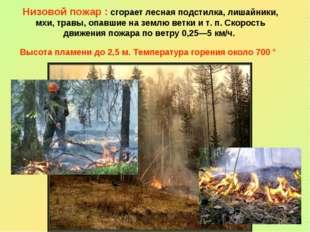 Низовой пожар : сгорает лесная подстилка, лишайники, мхи, травы, опавшие на