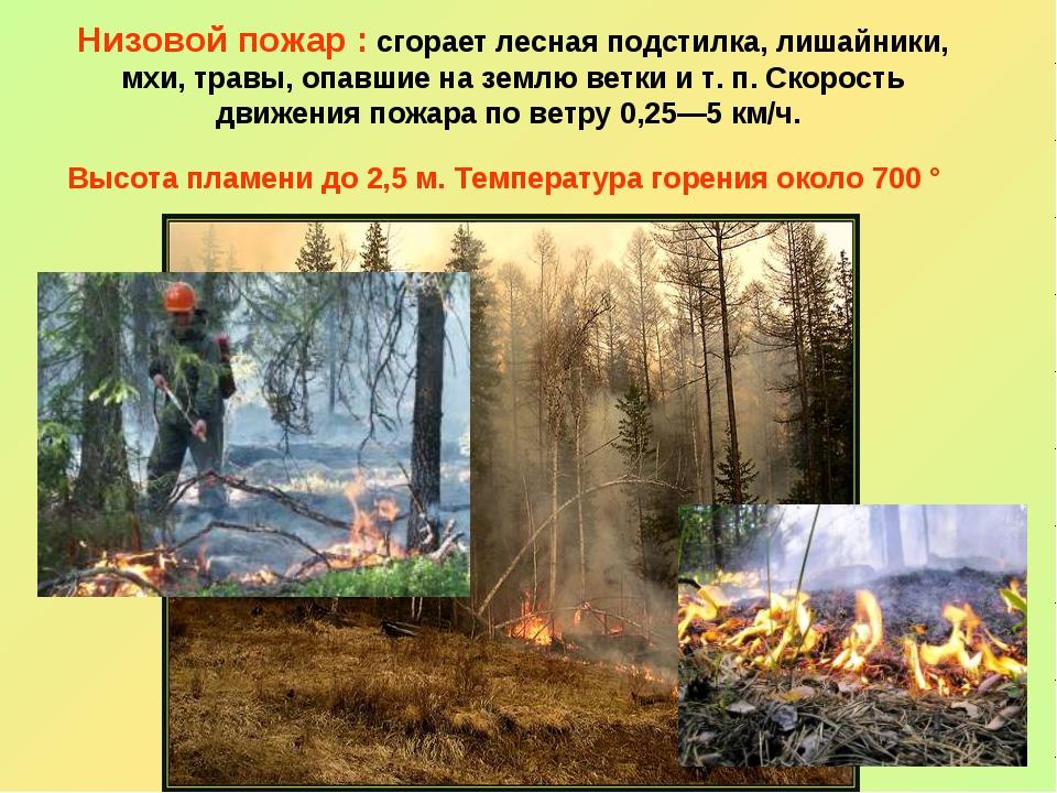 Низовой пожар : сгорает лесная подстилка, лишайники, мхи, травы, опавшие на...