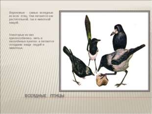 Вороновые - самые всеядные из всех птиц. Они питаются как растительной, так и