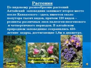 Касатик (Ирис) По видовому разнообразию растений Алтайский заповедник занимае