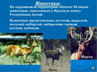 На охраняемой территории обитает 59 видов животных, занесенных в Красную книг
