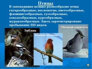 В заповеднике велико разнообразие птиц: гагарообразные, веслоногие, аистообра