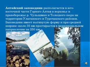 Алтайский заповедник располагается в юго-восточной части Горного Алтая в верх
