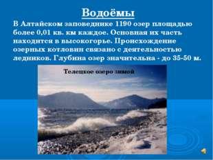В Алтайском заповеднике 1190 озер площадью более 0,01 кв. км каждое. Основная