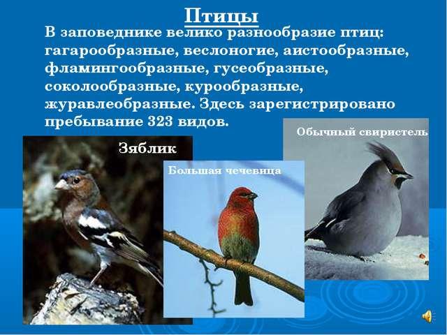 В заповеднике велико разнообразие птиц: гагарообразные, веслоногие, аистообра...