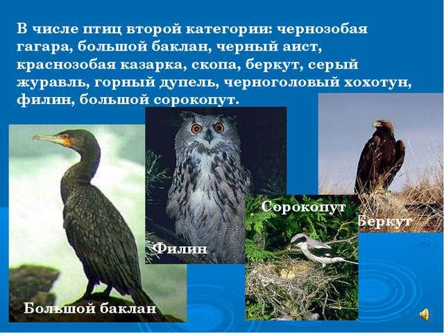 В числе птиц второй категории: чернозобая гагара, большой баклан, черный аист...
